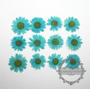 1 small packs 3-4cm real dry pressed flower blue flower craft for DIY glass dome resin filling 1503084