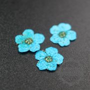 5packs 6-8mm bule dry pressed flower for pendant charm jewelry 20pcs each pack 1503181-6