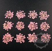 1 small packs pink real dry pressed flower craft for DIY glass dome resin filling 1503113