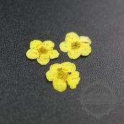 5packs 6-8mm yellow dry pressed flower for pendant charm jewelry 20pcs each pack 1503181-5