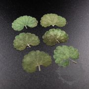 5packs 2-3cm DIY dry pressed flower leaf for pendant charm jewelry 6pcs each pack 1503182-1