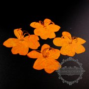5packs 3-5cm orange DIY dry pressed flower pendant charm jewelry supplies 1503185