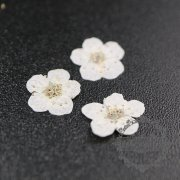 5packs 6-8mm white dry pressed flower for pendant charm jewelry 20pcs each pack 1503181-2