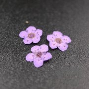 5packs 6-8mm purple dry pressed flower for pendant charm jewelry 20pcs each pack 1503181-1