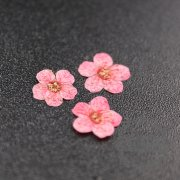 5packs 6-8mm red dry pressed flower for pendant charm jewelry 20pcs each pack 1503181-3