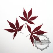 1 small packs 5-8cm real dry pressed flower red maple leaf craft for DIY glass dome resin filling 1503099