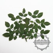1 small packs real dry pressed flower green rose leaf craft for DIY glass dome resin filling 1503088